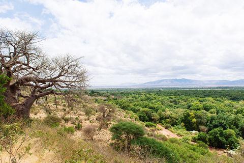 Safari Tag 2: Dschungel & Affen